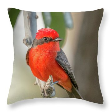 Winged Zorro Throw Pillow