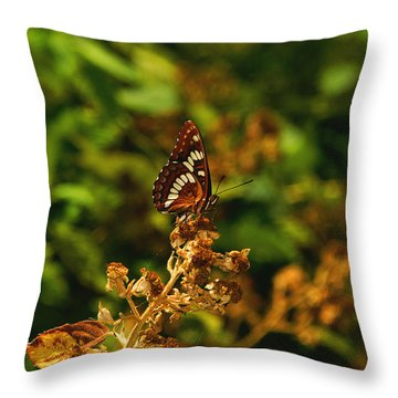 Wingo Butterfly Throw Pillow