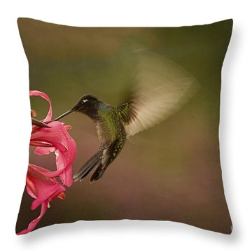 Throw Pillow featuring the photograph Wings In Motion 3 by Anne Rodkin