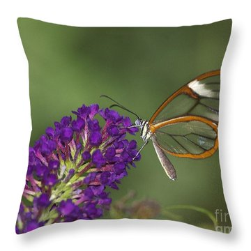 Wings Like Glass Throw Pillow
