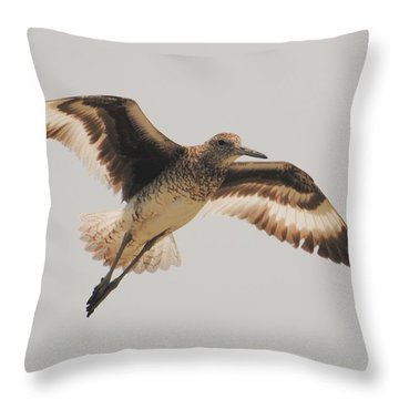 Wings Of A Willett  Throw Pillow