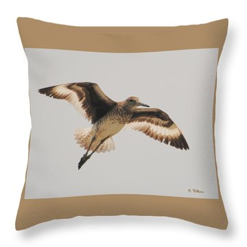 Wings Of A Willett  Throw Pillow