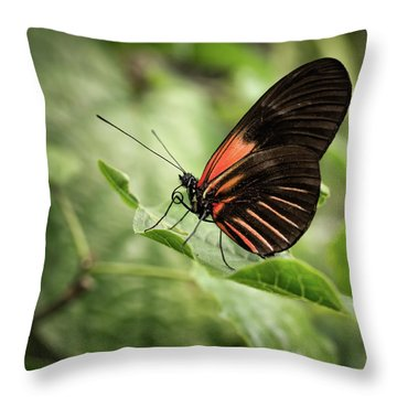 Wings Of The Tropics Butterfly Throw Pillow