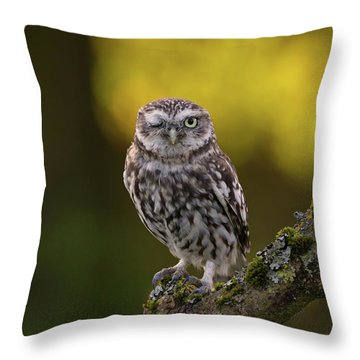 Winking Little Owl Throw Pillow