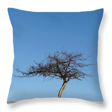 Winter At The Crabapple Tree Throw Pillow