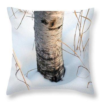 Winter Birch Throw Pillow by Bill Morgenstern