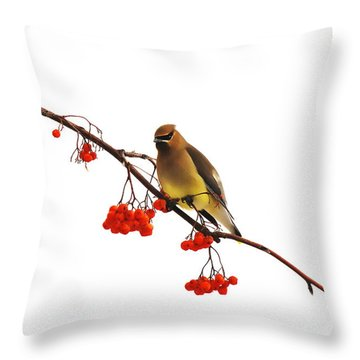 Winter Birds - Waxwing  Throw Pillow