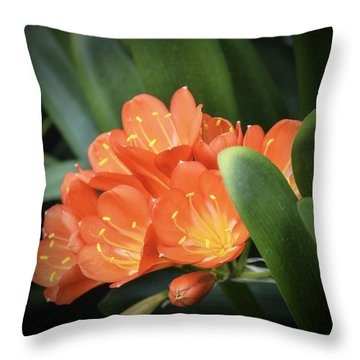 Winter Bloom Clivia Throw Pillow by Julie Palencia
