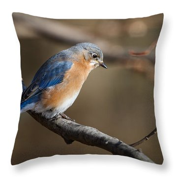 Winter Blue Bird Throw Pillow
