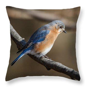Winter Blue Bird Throw Pillow