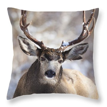 Winter Buck II Throw Pillow
