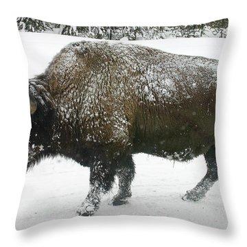 Winter Buffalo Throw Pillow