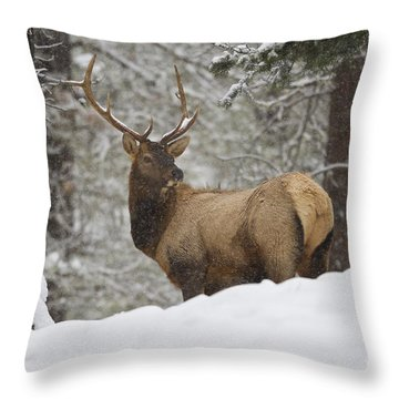 Winter Bull Throw Pillow