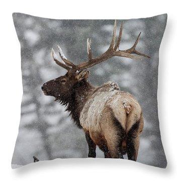 Winter Bull Elk Throw Pillow