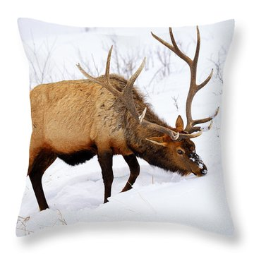 Throw Pillow featuring the photograph Winter Bull by Greg Norrell