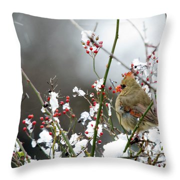 Throw Pillow featuring the photograph Winter Cardinal by Gary Wightman