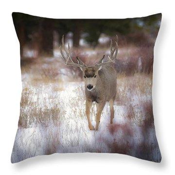 Winter Colors Throw Pillow