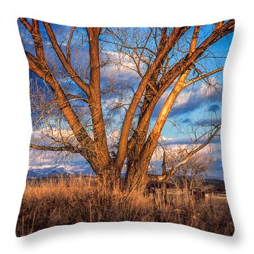 Winter Cottonwood Ranch Landscape Colorado Throw Pillow