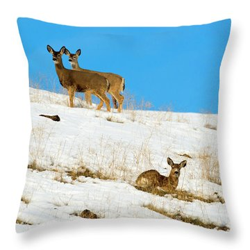 Throw Pillow featuring the photograph Winter Deer by Mike Dawson