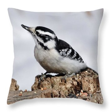 Winter Downy Woodpecker Throw Pillow
