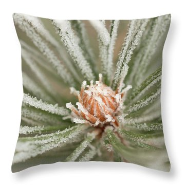 Throw Pillow featuring the photograph Winter Evergreen by Ana V Ramirez