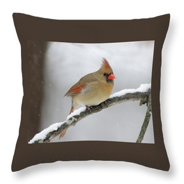 Winter Female Cardinal Throw Pillow