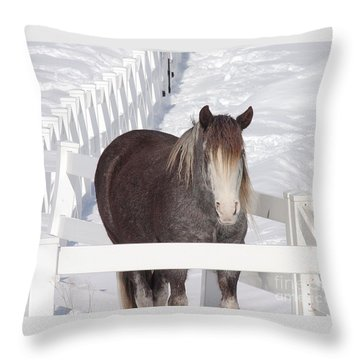 Winter Horse Throw Pillow by Debbie Stahre