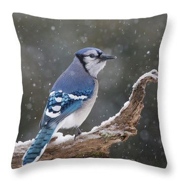 Throw Pillow featuring the photograph Winter Jay by Mircea Costina Photography