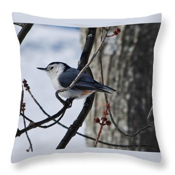 Throw Pillow featuring the photograph Winter Nut Hatch by Al Fritz