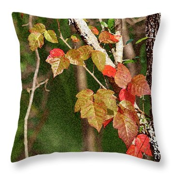 Winter On Gillot Blvd. Pt. Charlotte,fl Throw Pillow