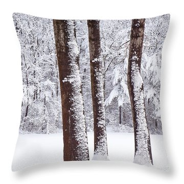 Winter On Paradise Pond Throw Pillow