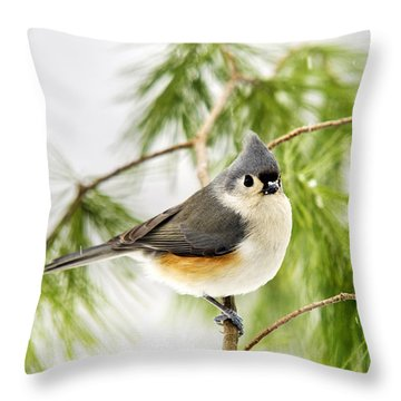 Winter Pine Bird Throw Pillow by Christina Rollo