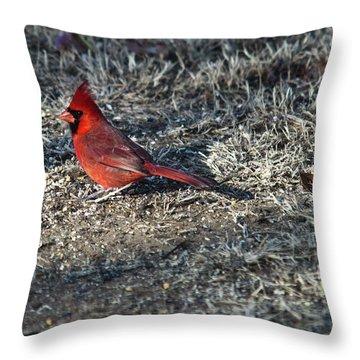 Winter Redbird Throw Pillow by Douglas Barnett