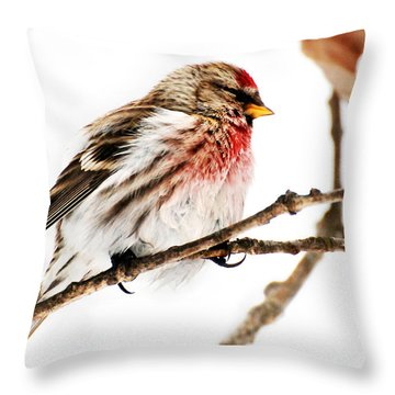 Winter Redpoll Throw Pillow by Christina Rollo