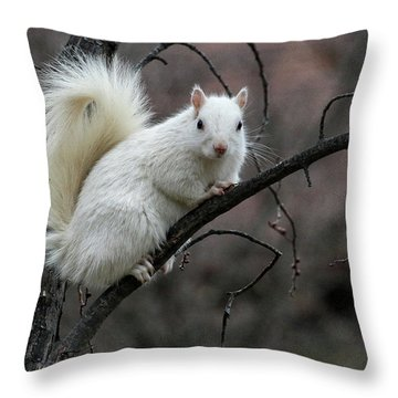 Winter Squirrel Throw Pillow