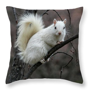 Throw Pillow featuring the photograph Winter Squirrel by William Selander