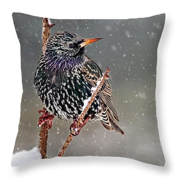 Winter Starling 2 Throw Pillow