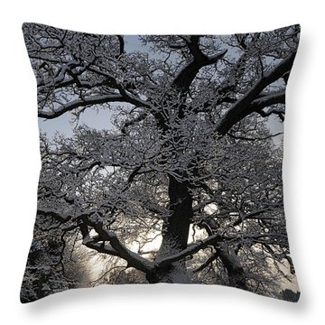 Winter Tree In North Wales Throw Pillow