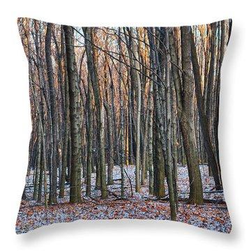 Winter - Uw Arboretum Madison Wisconsin Throw Pillow