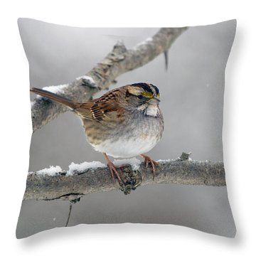 Winter White Throat II Throw Pillow by Timothy McIntyre