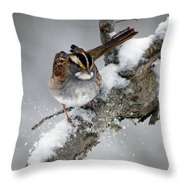 Winter White Throat Throw Pillow by Timothy McIntyre