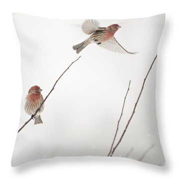 Winter Wind Surfing 2 Throw Pillow