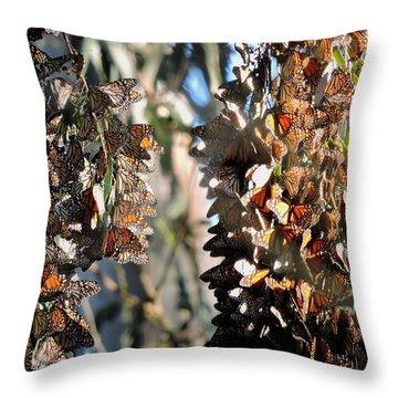 Wintering In Santa Cruz Throw Pillow