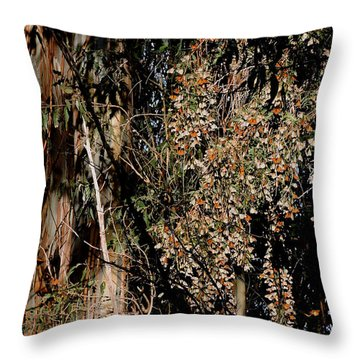 Wintering Monarchs Throw Pillow
