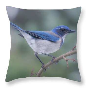 Throw Pillow featuring the photograph Wintering Scrub Jay by Angie Vogel