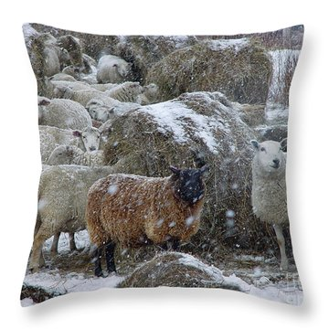 Wintering Sheep Throw Pillow