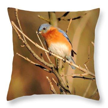 Winter's Bluebird  Throw Pillow