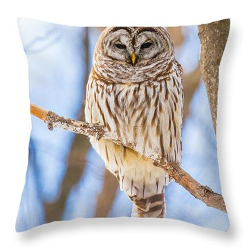 Wintry Stare Throw Pillow