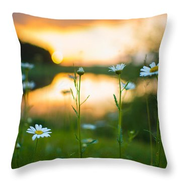 Wisconsin Daisies At Sunset Throw Pillow