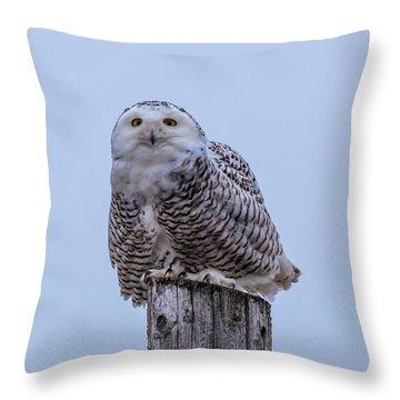 Wisconsin Snowy Owl Throw Pillow